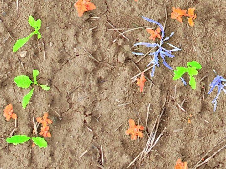 Malezas y plantas cultivadas se detectan automáticamente y se marcan en diferentes colores. © Foto: Philipp Lottes